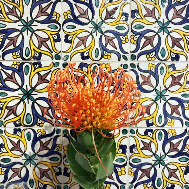 Mosaic House Moroccan tile Tulipe Multi